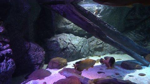 underwater world with marine life. fish swim at the bottom