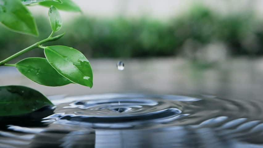 Fresh green leaf with water drop over the water , a nature leaf branch relaxation with water ripple drops concept , slow motion shot