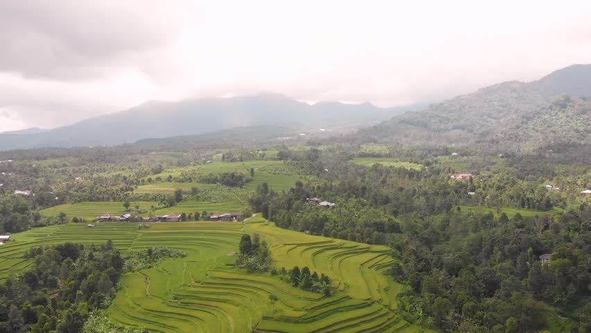Flying above Balinese Rice fields looking at Mountains and beautiful colours of the paddies, Bali, Indonesia rice stacks showing the form of water irrigation south east asia | Shutterstock HD Video #1025848919