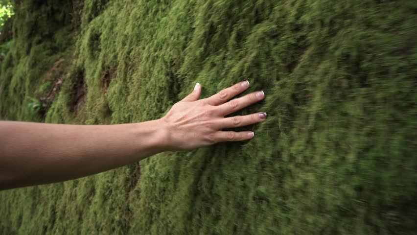 Woman hand touching softly the moss on the wall in the tropical rainforest .