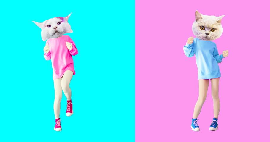 Animation minimal gif art. Set of funny cats | Shutterstock HD Video #1026037307