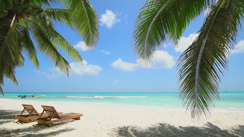 Blue ocean white sand beach nature tropical palms Island. Caribbean sea and sky. Small wild beach chairs. landscape Island. Palms turquoise sea background Atlantic ocean. | Shutterstock HD Video #1026083126