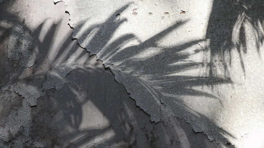 Manila palm tree shadows reflected on the old concrete wall coated with peeled textured paint | Shutterstock HD Video #1026186443