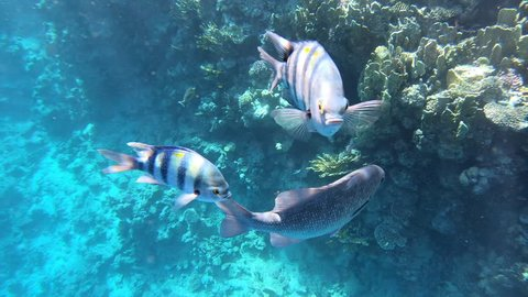 4k - coral reef underwater with beautiful fish.