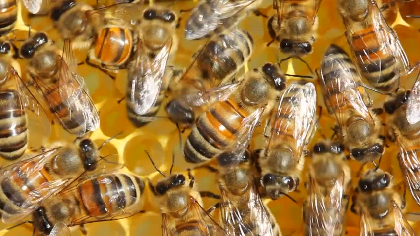 Bees produce wax and build honeycombs from it.