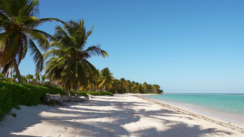 Large long stretched wild beach with white sand and blue sea. Tall palms and sky. Beautiful island Dominican Republic/Punta Cana is the most beautiful beach. Walk around the island. Paradise on earth #1026378881