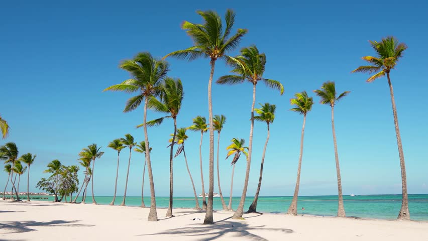 Island beaches palms and sea. Atlantic ocean and sky / Beautiful white wild beach. The best beach in the world. Wildlife Island. Isolated beach and blue ocean. Caribbean turquoise sea water | Shutterstock HD Video #1026530453