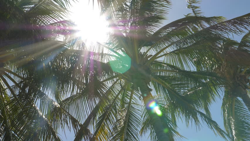 Slow motion low angle shot of sun shining through swaying palm trees. Guanacaste Province, Costa Rica, Central America. Handheld shot with stabilized camera. | Shutterstock HD Video #1026582584