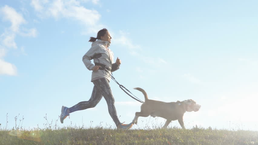 Bright sunny Morning Canicross exercises. Female runs with his beagle dog and happy smiling slow motion footage