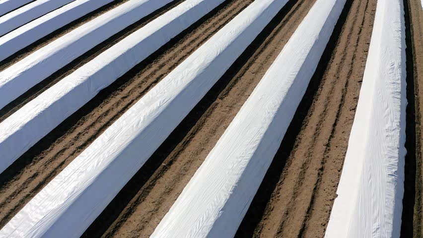 Push-Out Shot Of Covered Asparagus Fields