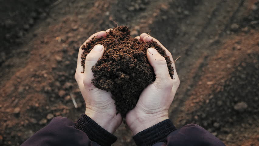 Top view: Farmer holding soil in hands close-up. Male hands touching soil on the field. Farmer is checking soil quality before sowing wheat.