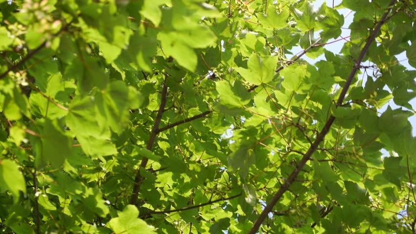 A beautiful green tree close up | Shutterstock HD Video #1026783980