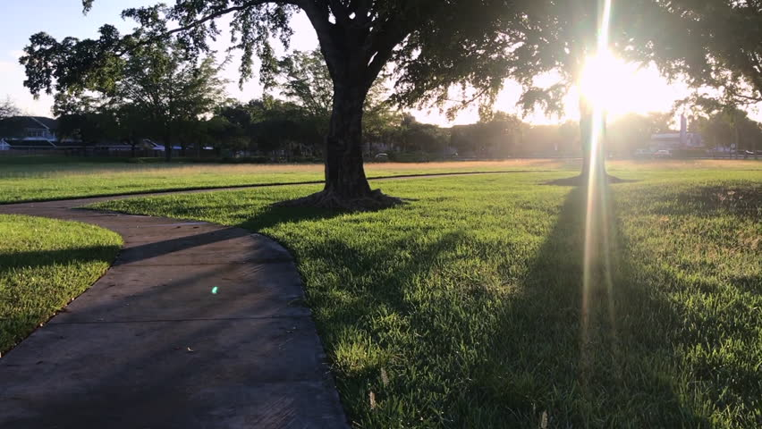 view of sunrise through the trees in park #1026795977
