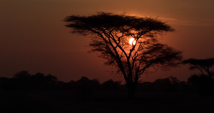 Timelapse of Sunrise in African plain with Acacia tree in foreground