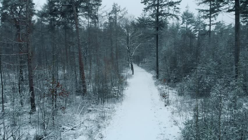 Moving forward on moody snow covered forest path.
