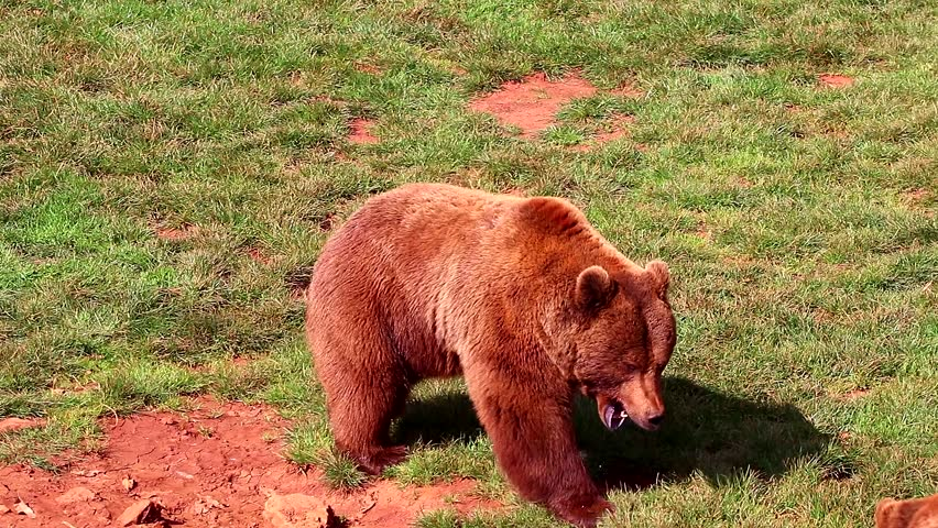 Bears fighting in Natural Park #1026907421
