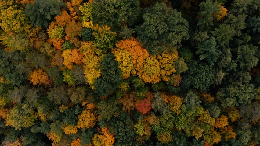 Drone flight over fall forest in Canada. Autumn leaves and trees. Orange, Red, Yellow and Green beautiful scene. | Shutterstock HD Video #1026941561