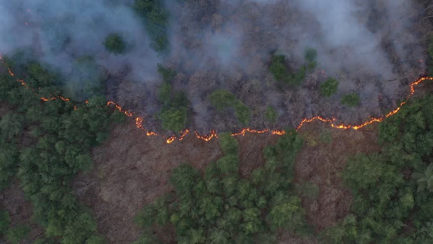 Fire Helicopter spraying water,forest fires,Sokcho-si, Gangwon-do, Republic of Korea | Shutterstock HD Video #1027019210