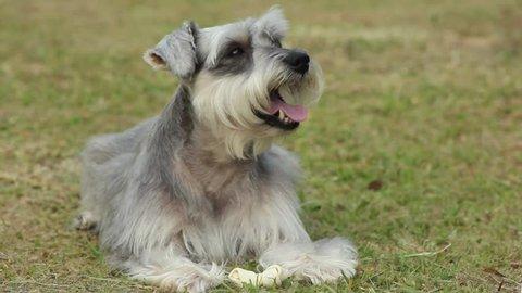 Cute Dog on The Park