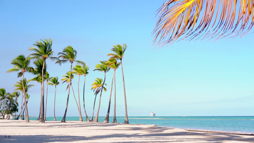 Palm trees standing in a row against a blue ocean. Beautiful Dominican beach Isolated palm trees on the beach. Best beaches of Punta Cana. Amazing palm leaf. Palms beach background. Summer and travel