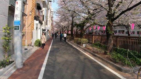 TOKYO, JAPAN - APRIL 7TH, 2019. Walking hyperlapse at Meguro River during the cherry blossom season.