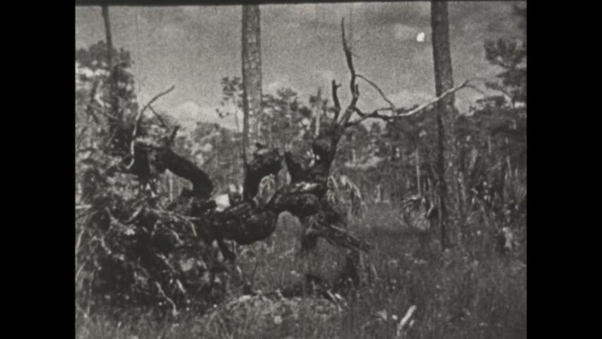 1930s: Seminole Indian hunter with rifle crawls under fallen tree to hunt. | Shutterstock HD Video #1027265990