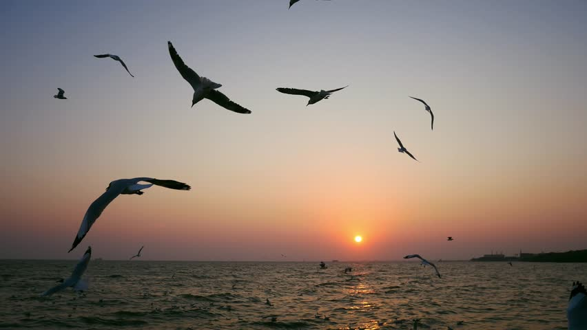 Seagull is flying beautifully with a blue sky in the background | Shutterstock HD Video #1027350506