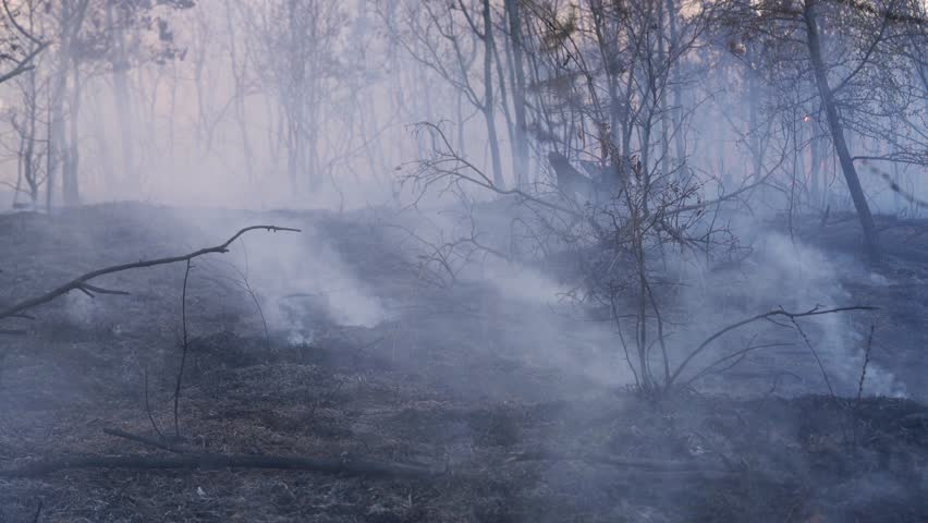 Fire in forest destroys nature | Shutterstock HD Video #1027351805