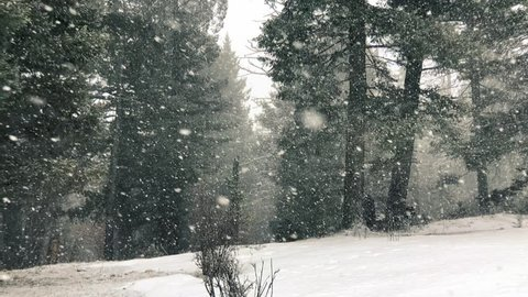 Thick, dense, heavy snow falling in forest during winter. Mountainside viewpoint of evergreens. Snow falling sideways in extra large chunks. Serene, cold winter scene. 120fps slow motion.