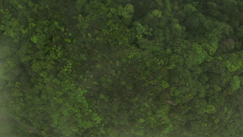 Aerial shot flying over a dense jungle canopy. The shot ascends above the tree canopy and through thick clouds. #1027532597