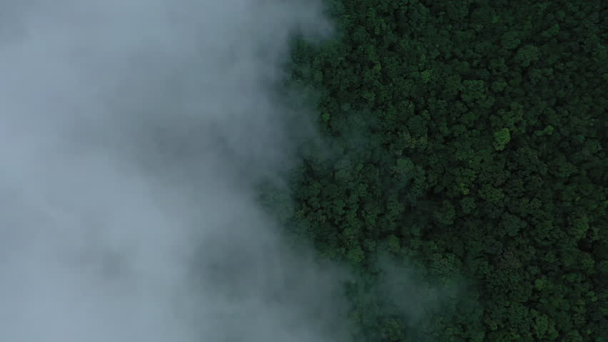 A aerial drone shot flying above a tropical forest. You can see the dense green canopy with rain clouds above it.