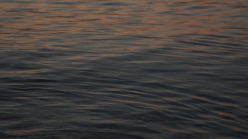 Calm waves in rolling in in sunset light reflecting the warm light.   Shutterstock HD Video #1027533185
