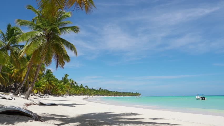 Amazing white sand Isle palms beach turquoise sea water background. Caribbean white sand beaches. Palms on wild white sand beach. Nature summer vacation Dominican Republic. White sand and azure sea   Shutterstock HD Video #1027533506