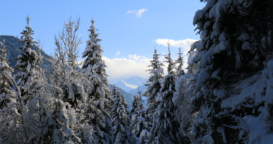 Snow covered trees in winter in mountains   Shutterstock HD Video #1027544348
