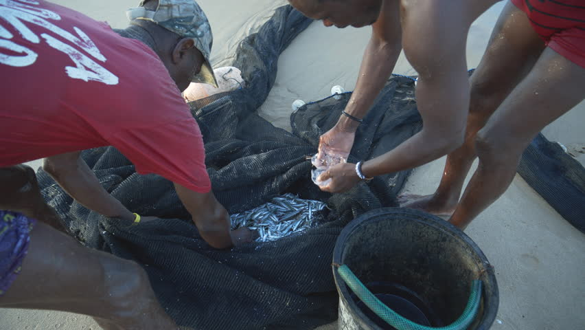 4K close-up view of two subsistence fisherman examining their catch of small fish in seine net, Mozambique Royalty-Free Stock Footage #1027651601