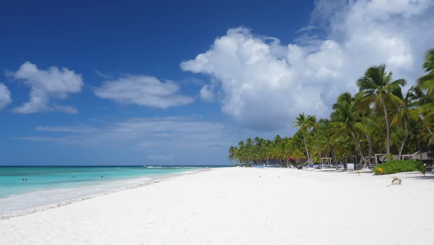 Coconut palm trees on sandy beach at caribbean island. Vacation summer holidays   Shutterstock HD Video #1027663829