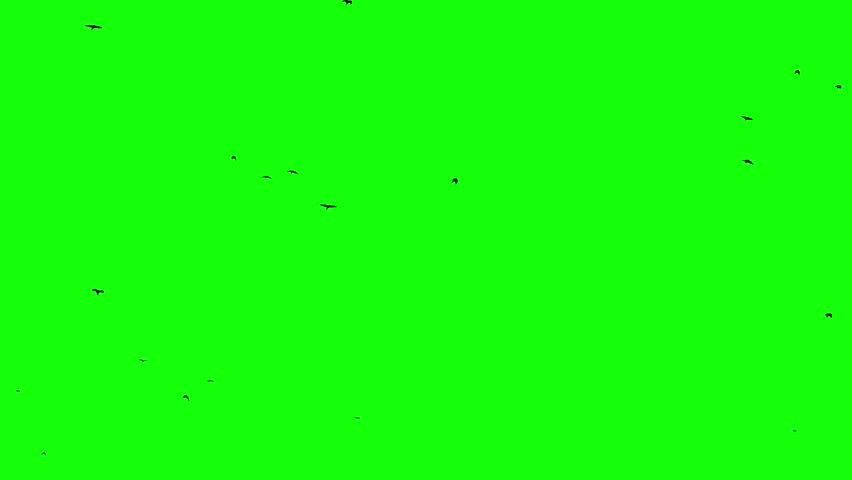 Flock of birds rises from the horizon up to sky Seamless Loopable footage chroma key composition object | Shutterstock HD Video #1027693334