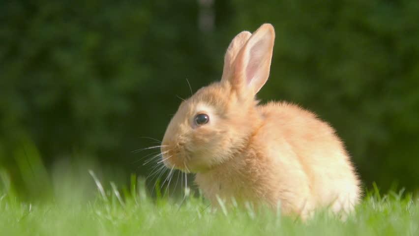 Beautiful little rabbit resting in the garden | Shutterstock HD Video #1027715084
