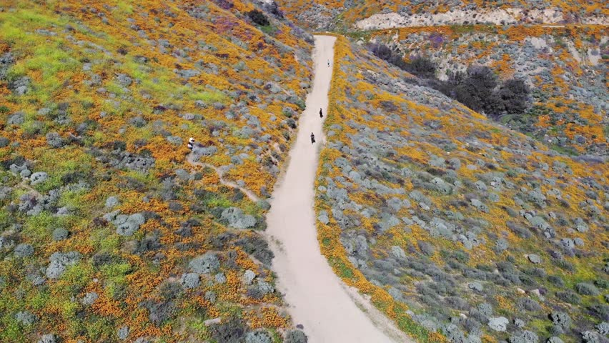 Drone footage of rare wild flower super bloom in California. People walking on hiking trail in mountains Royalty-Free Stock Footage #1027759715