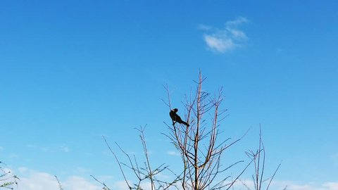 A lonely bird standing on thin branches in slow motion
