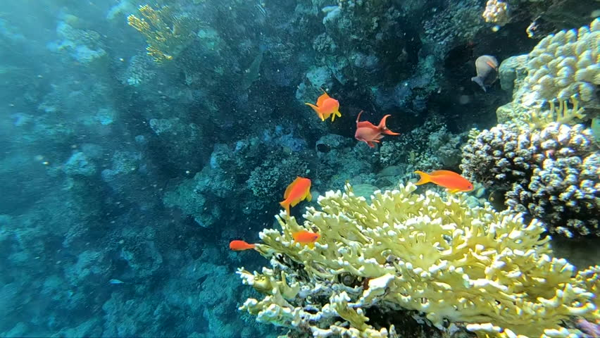 Natural aquarium in Red Sea, colorful fishes near the coral reef in Red Sea | Shutterstock HD Video #1027829975