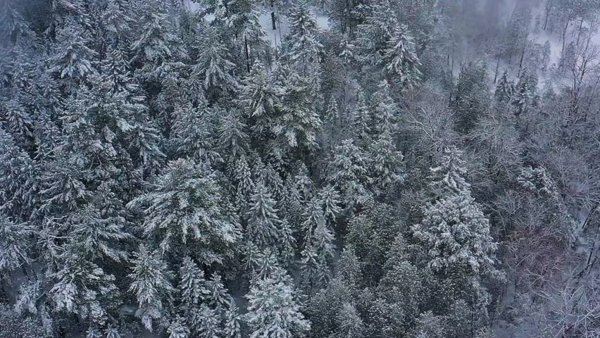 Aerial orbit above an evergreen forest during a snow storm SLOW MOTION