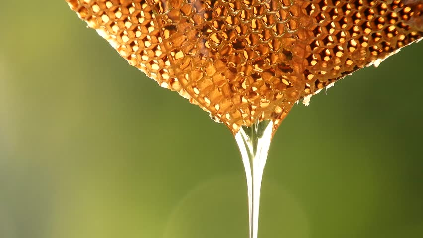 Closeup honey dripping from honey comb.