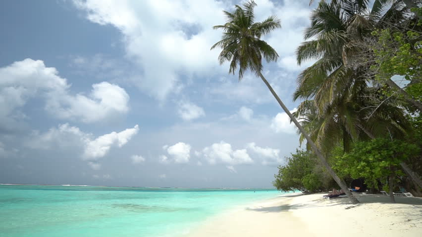 Coconut tree blows in the wind on idyllic turquoise water beach #1028024015