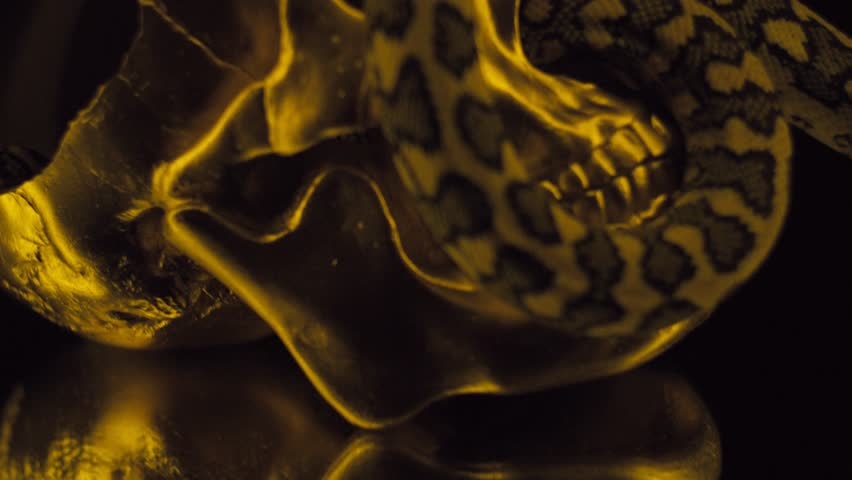 A snake and a gold skull Royalty-Free Stock Footage #1028082200