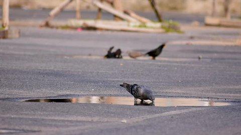 Birds in various ways