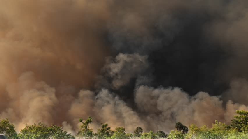 Thick plumes of dark SMOKE rise from a Amazon rain forest in Brazil that is on fire and burning due to deforestation. Dark yellow, black, and gray smoke billows into the sky. | Shutterstock HD Video #1028095271