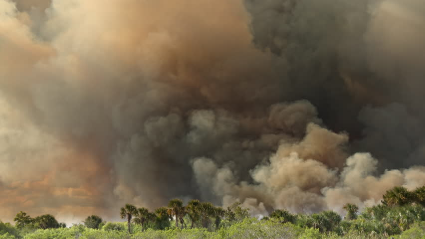 Giant wildfire with FLAMES and SMOKE consumes a Florida forest during a brush fire burning in wetlands grasses and brush. Dark yellow, black, and gray smoke billows into the sky. | Shutterstock HD Video #1028095310