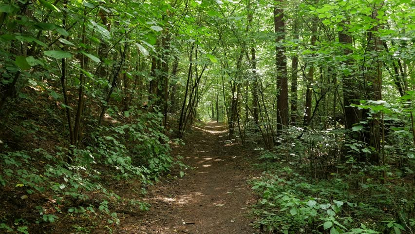 Personal Perspective of Walking on a Path in the green Forest, Steady Cam Shot. Pov of Hiker Walking on Trail Through the Forest