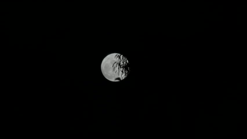 Full moon rises behind the leaves of a tree | Shutterstock HD Video #1028167094